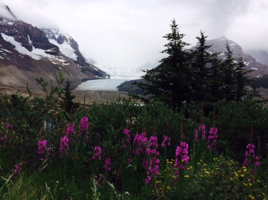 Glacier & Flowers