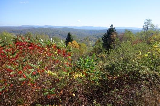 Cass-Landscape 3